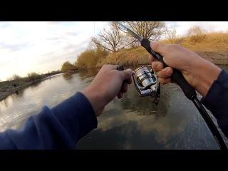 жерех на малых реках видео